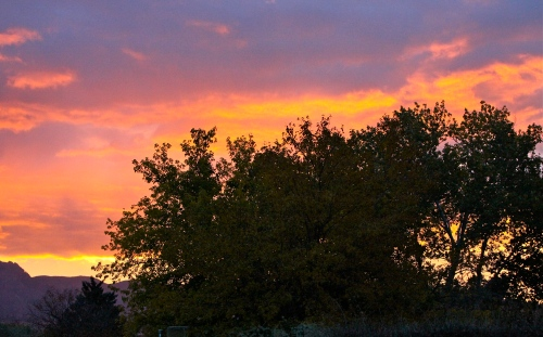 Sunrise through the cottonwoods seen from my patio in Corrales, New Mexico.