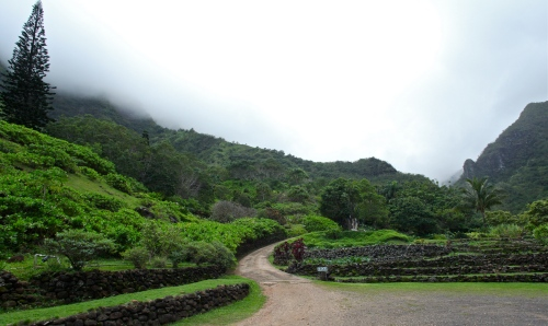 These rock wall terraces in the Kalo (Taro) garden at Limahuli Garden are 700 years old.