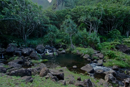 A lovely contemplation spot with Hala trees at Limahuli Garden, Ha'ena, Kaua'i.
