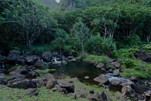 A lovely contemplation spot with Hala trees at Limahuli Garden, Ha'ena, Kaua'i.