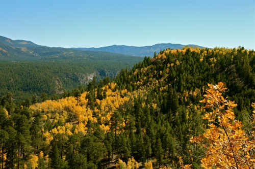 Golden Quaking Aspen in the Jemez Mountains.