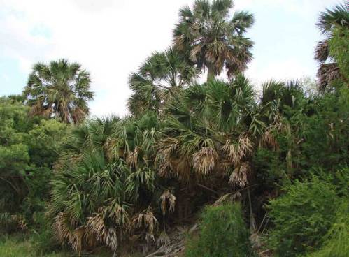 Sabal Palm Audubon Refuge
